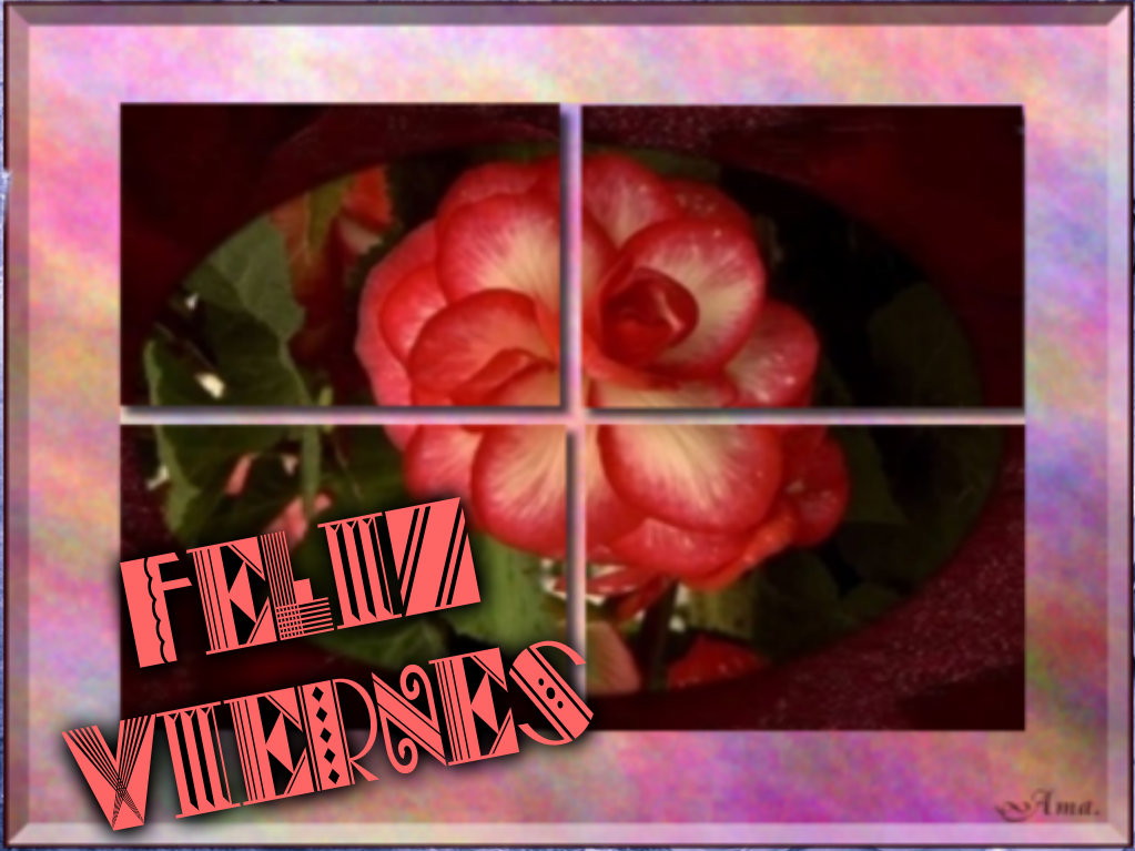 Rosa Dividida en Cuatro Pizap.com142876975281112_zps8wx93vs8