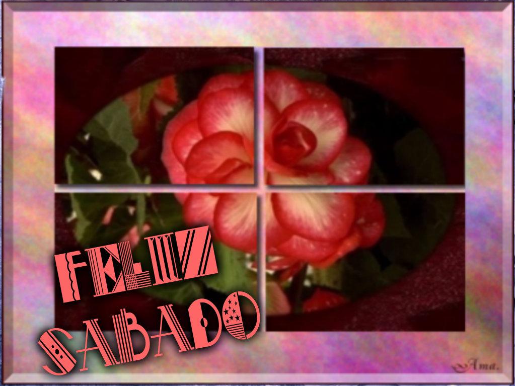 Rosa Dividida en Cuatro Pizap.com142876977165113_zpsay2jfwg3