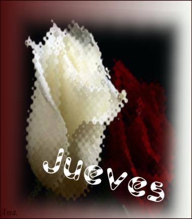 Bonitas rosas blanca y roja QhsxO2Fkur13_zpshca21cdp