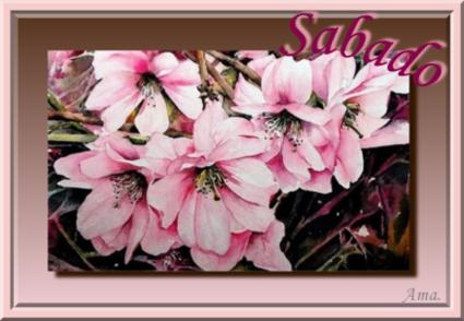 Rosas Chinas  Sabado_zpsapnczjkv