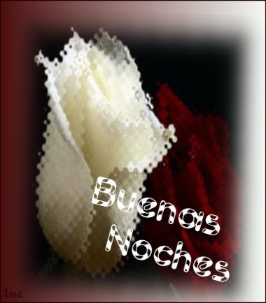 Bonitas rosas blanca y roja T9Fni64F8VeK_zpsl5w5kbtt