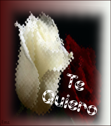 Bonitas rosas blanca y roja Z8onOkV4oKxK_zps7r9hymeu