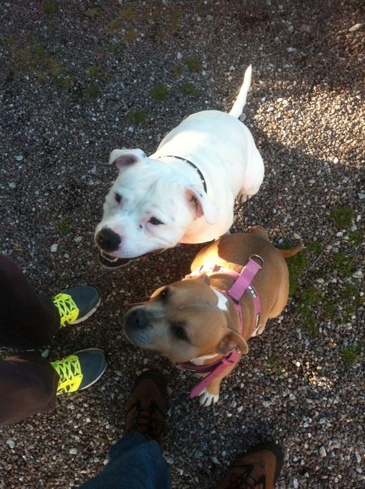 Skye, one of her puppies im keeping 12033054_10153224048388727_7783197278519012684_n_zpsldhiipsx