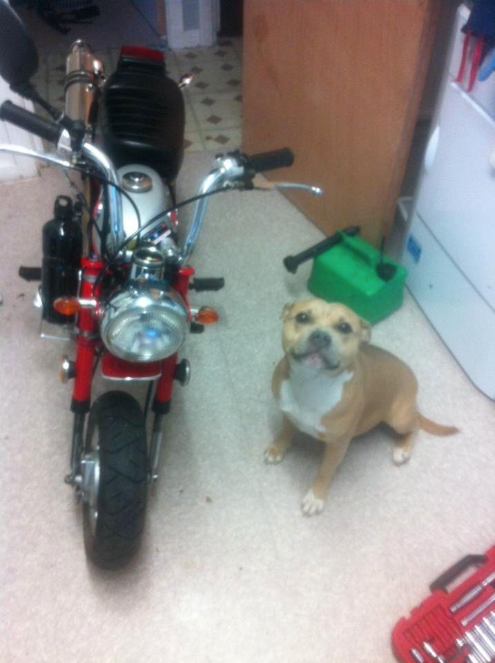 Skye, one of her puppies im keeping 12042766_10153292132248727_7239431569760862686_n_zpsakikcjep