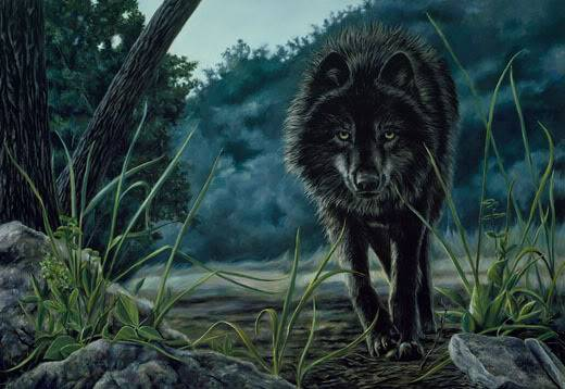 Yami [Awating Approval] Black_Wolf_Hunting1