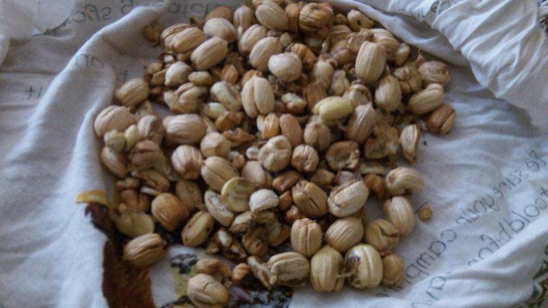 The wonderful acorn!  101_4017
