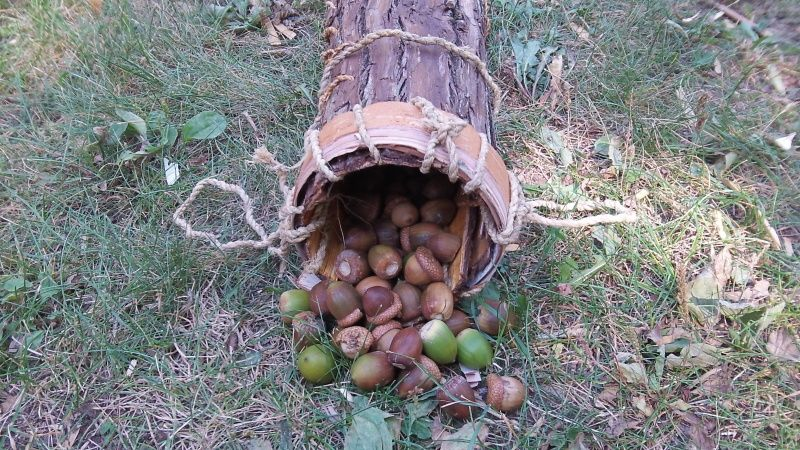 The wonderful acorn!  101_4021