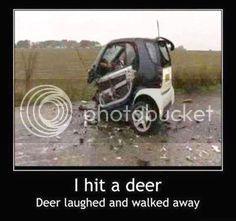Hit a deer today 91b38c94052b44bd0f57a68647739525