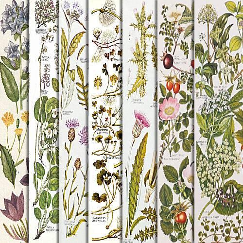 Botanical Series Downloads GBGBotanyPreview4_zpseldm0ufg