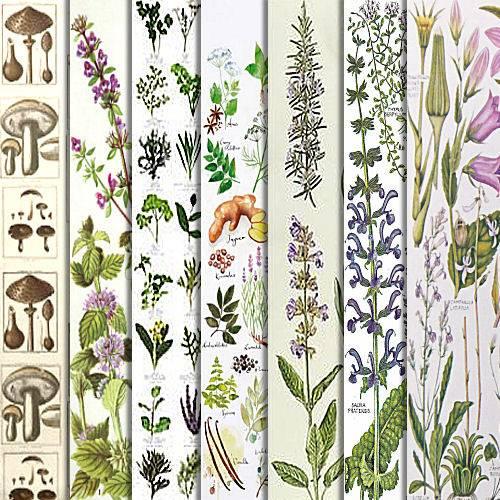 Botanical Series Downloads GBGBotanyPreview5_zpsjugbpaaz