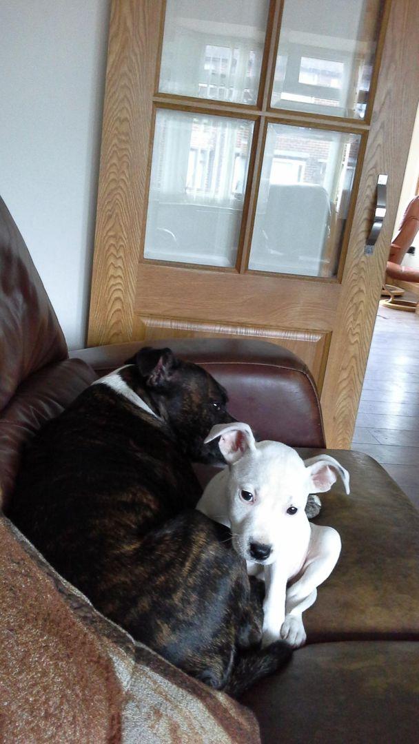 really love my dogs! 20140617_183340_zpskewxv8gn