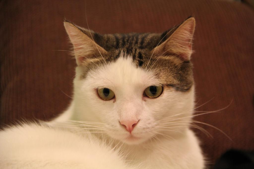 2 πανέμορφοι γάτοι δίνονται προς υιοθεσία IMG_2445_zps679f44de