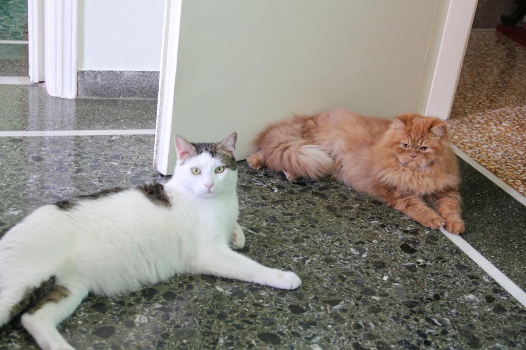 2 πανέμορφοι γάτοι δίνονται προς υιοθεσία IMG_4744_zps48f3701c