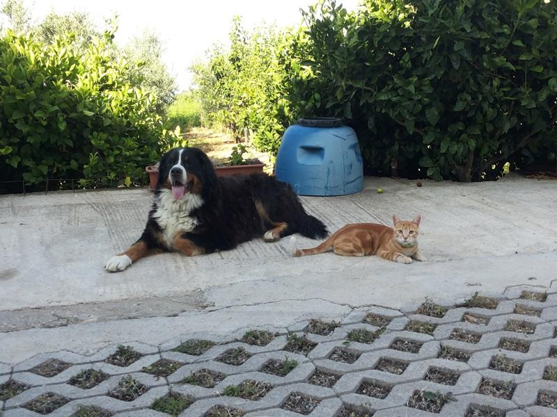 Maketarske mačke 20140706_083755_zpsef9dae32