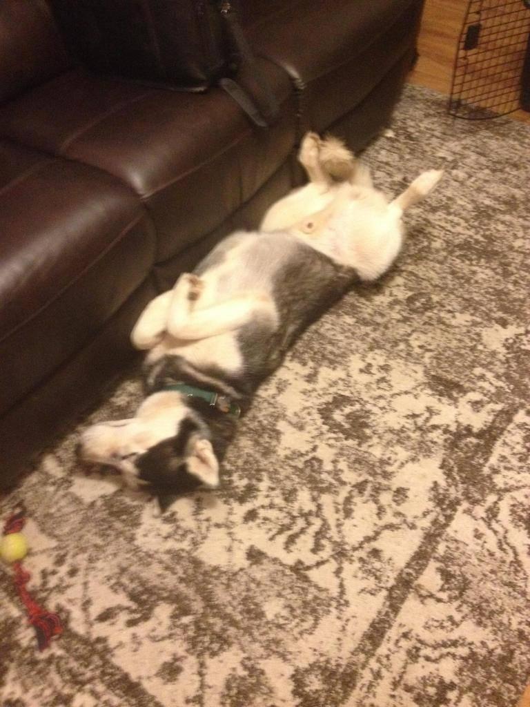 New husky owner/dog IMG_09271_zpsda593563