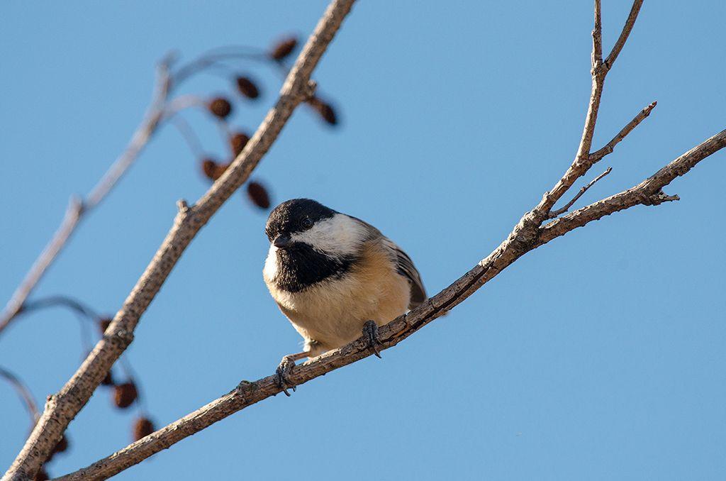 Quelques oiseaux DSC_0044_zpsb2ye77gu