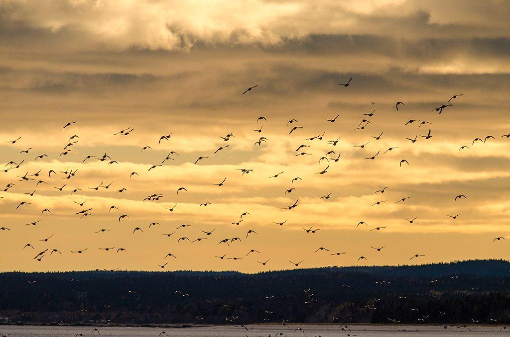 Quelques oiseaux DSC_0293_zpsedil415j