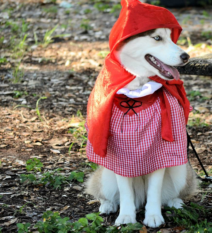 Little Red Riding Hood!! (Mya, Kody, & Asia rocked it!) HALLOWEEN PARTY!  Asia_zps645fc734