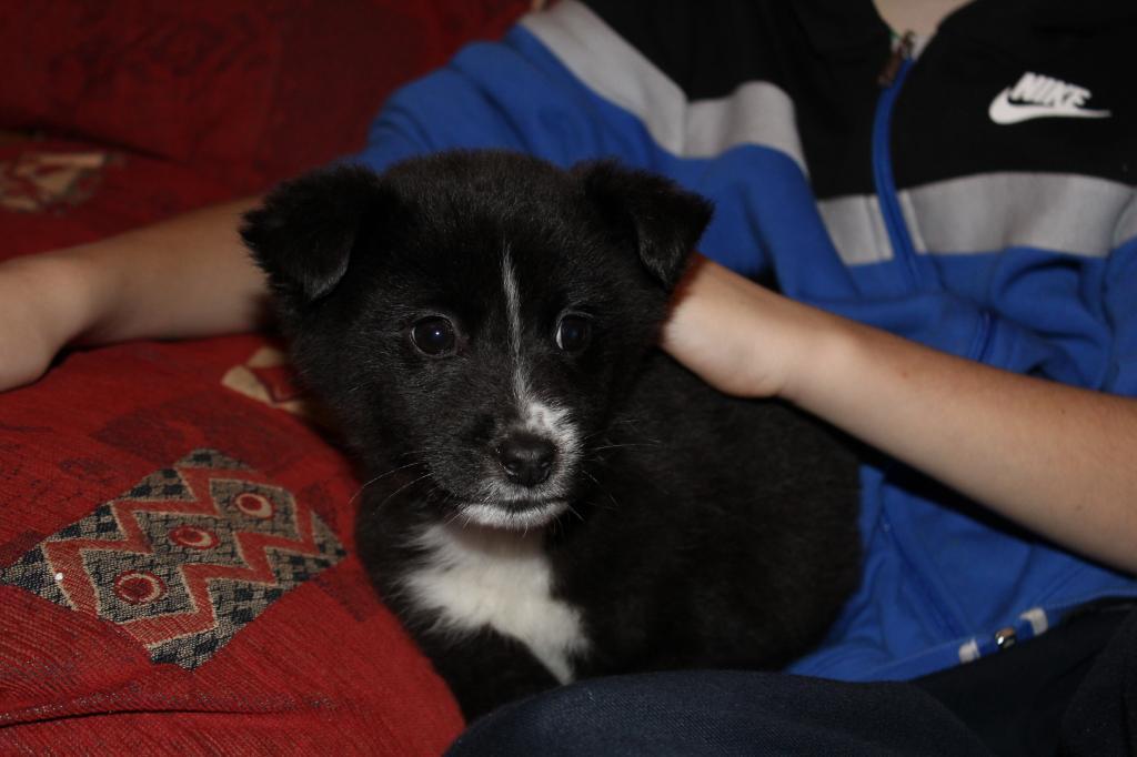 Is My Puppy A Husky? IMG_0329_zpsb76c20b5