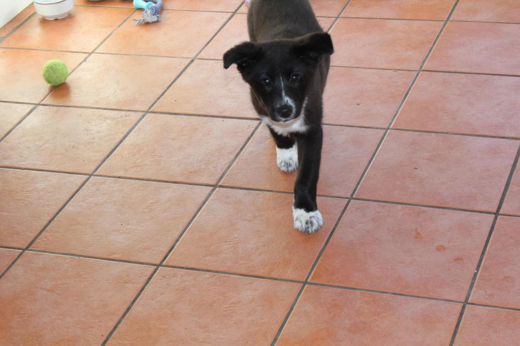 Is My Puppy A Husky? - Page 2 IMG_0426_zps1295c0b6