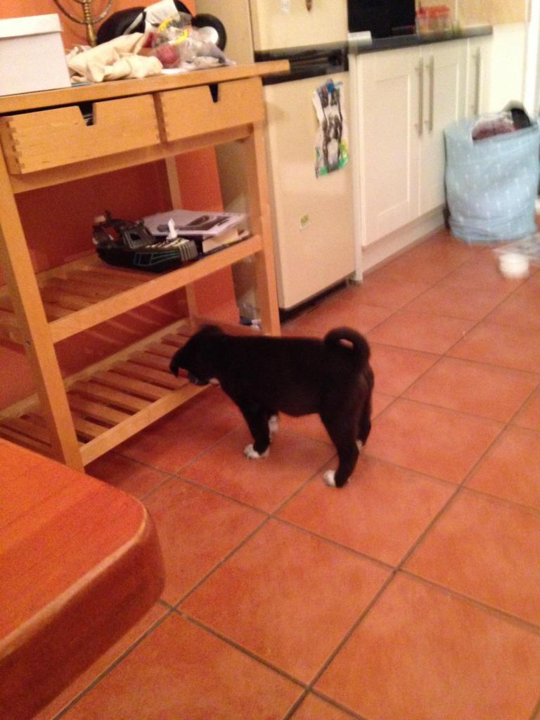 Is My Puppy A Husky? - Page 2 IMG_1442_zpse4307878