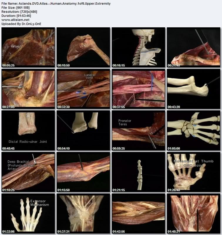6 Aclands Dvd Atlas Of Human