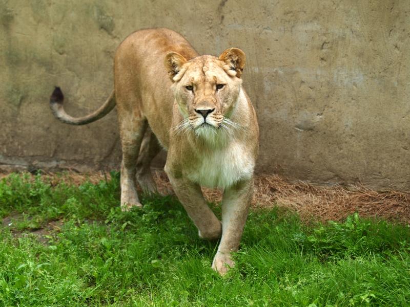 Sortie au Zoo d'Olmen (à côté de Hasselt) le samedi 14 juillet : Les photos 8dbfdb68