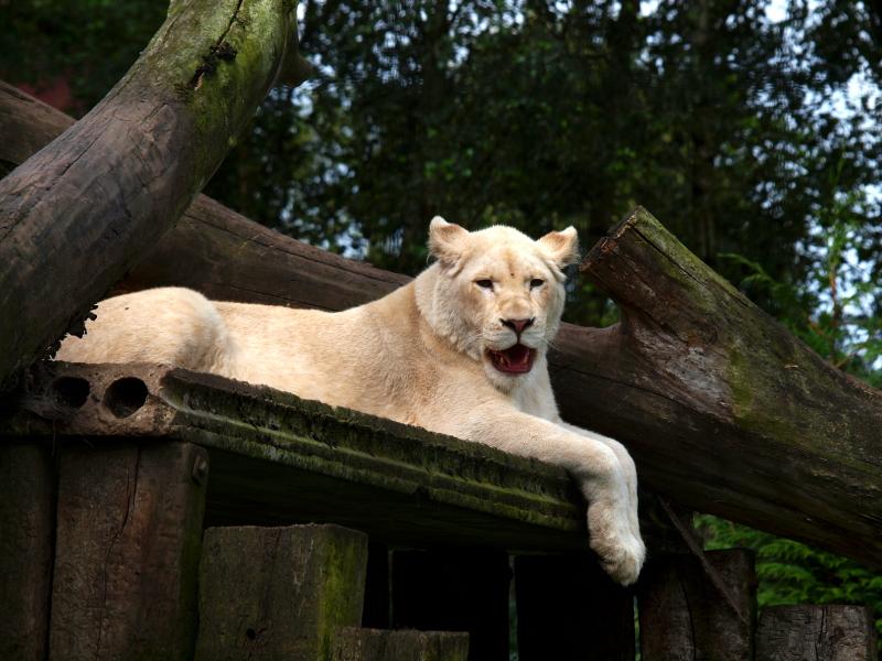 Sortie au Zoo d'Olmen (à côté de Hasselt) le samedi 14 juillet : Les photos 9ad2a309