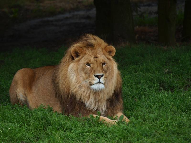 Sortie au Zoo d'Olmen (à côté de Hasselt) le samedi 14 juillet : Les photos A39a7219