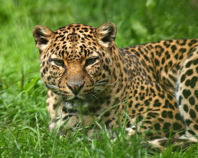 Sortie au Zoo d'Olmen (à côté de Hasselt) le samedi 14 juillet : Les photos - Page 3 B83e1676