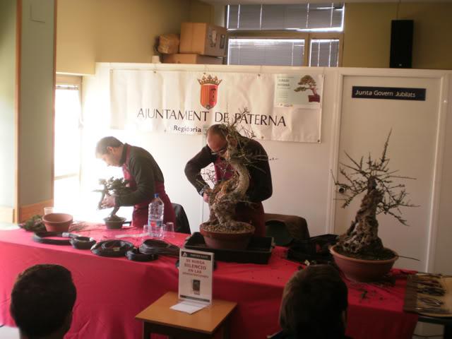 IV Exposición Bonsai Paterna 02