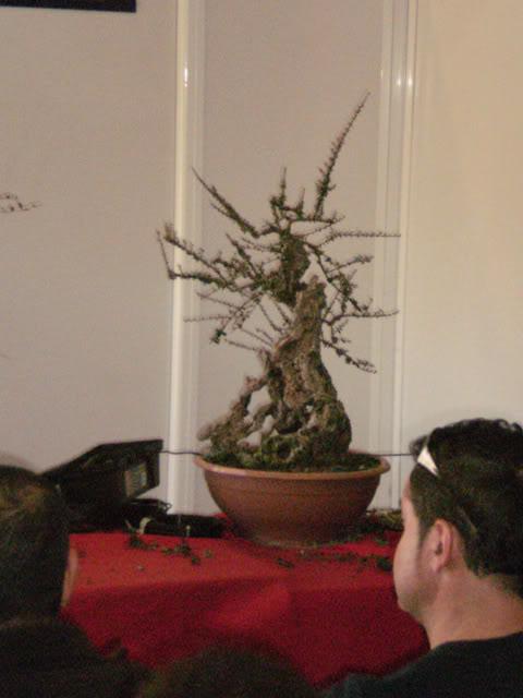IV Exposición Bonsai Paterna 04