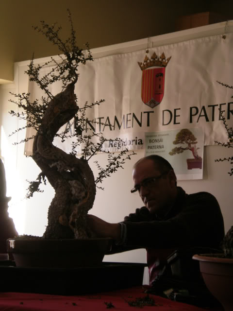 IV Exposición Bonsai Paterna 05