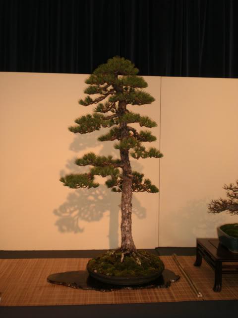 IV Exposición Bonsai Paterna 15