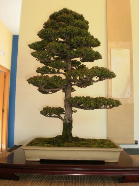 IV Exposición Bonsai Paterna 24