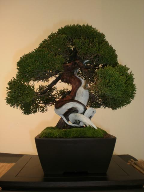 IV Exposición Bonsai Paterna 31