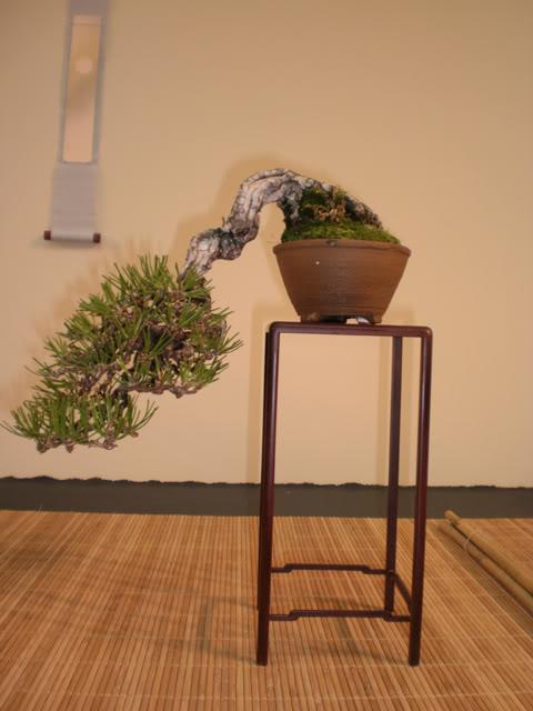 IV Exposición Bonsai Paterna 36