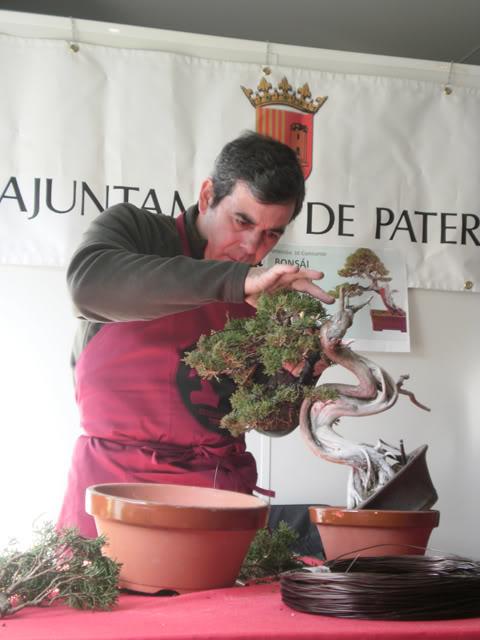 IV Exposición Bonsai Paterna 46