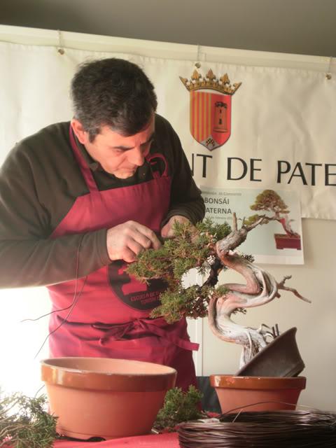 IV Exposición Bonsai Paterna 48