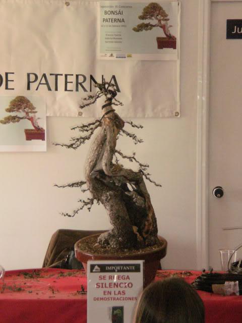 IV Exposición Bonsai Paterna 49