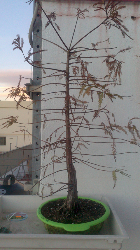#primaveravalenciana - Página 4 2012-12-04173327