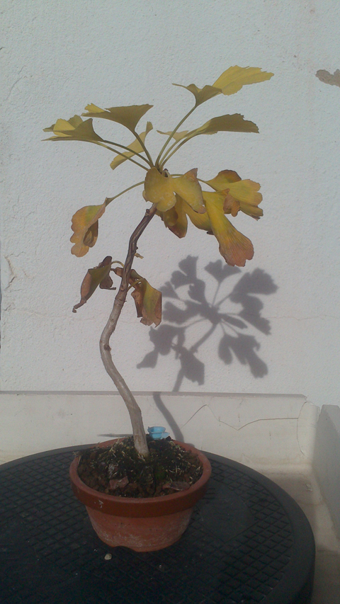 #primaveravalenciana - Página 4 2012-12-06144212