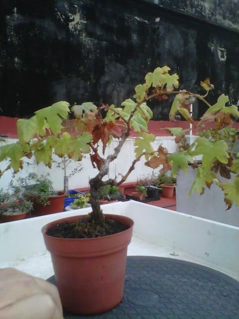 #primaveravalenciana - Página 2 IMG00138-20111120-1646