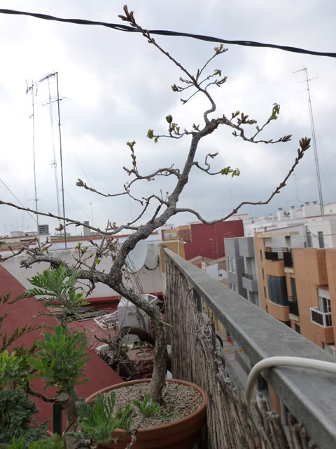 #primaveravalenciana - Página 3 PrimaveraValenciana3-04