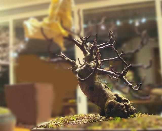 Ficus Carica - Para una Expo en 2014 Untitled-1