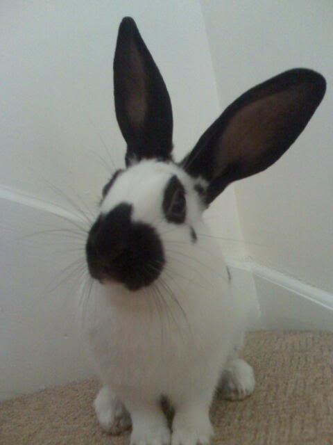 Forum Members Rabbits - Page 3 Moto_0028