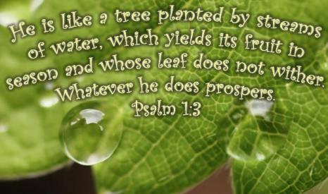 CHRONOLOGIC BIBLE Image389