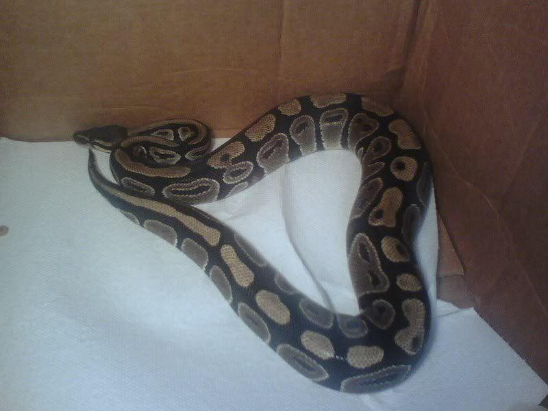 My Reptiles 0912071614
