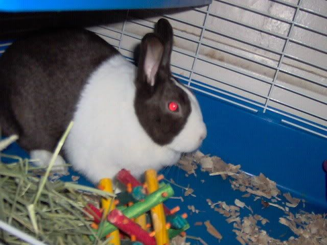 My 3 Bunnies Picture502
