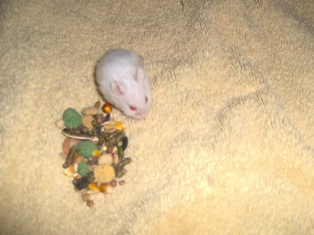 My Dwarf Hamsters Picture001